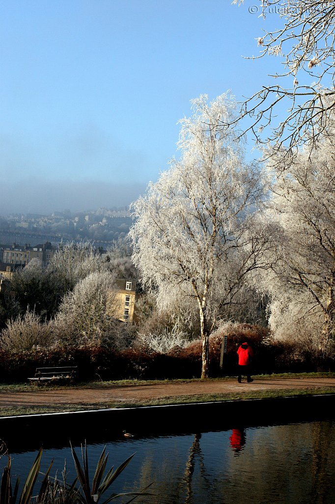 Hoar-frost by the Kennett and Avon Canal