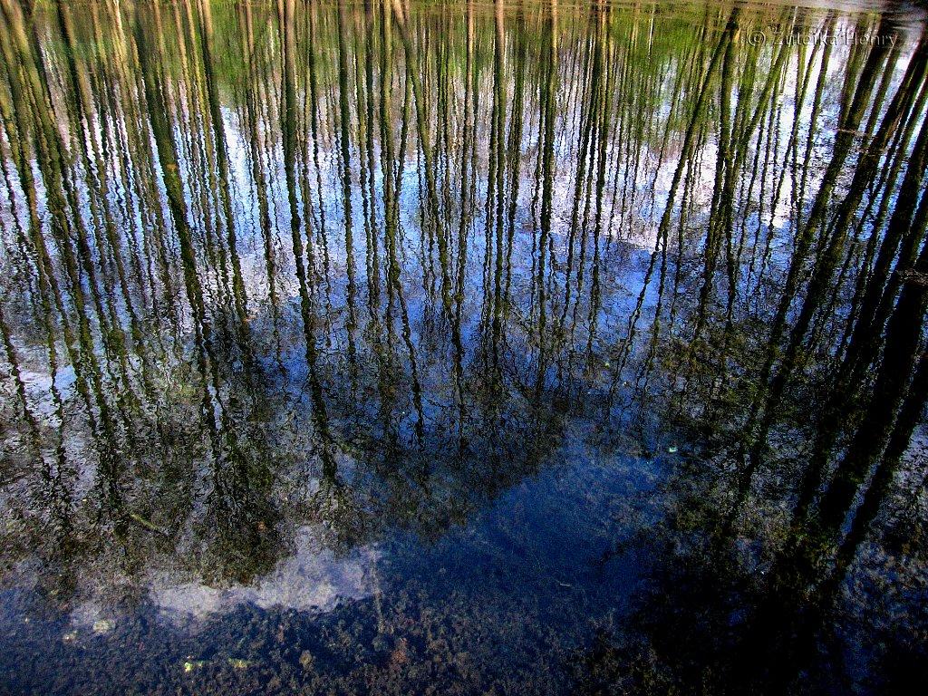 The Blue Waters park Tomaszow Mazowiecki