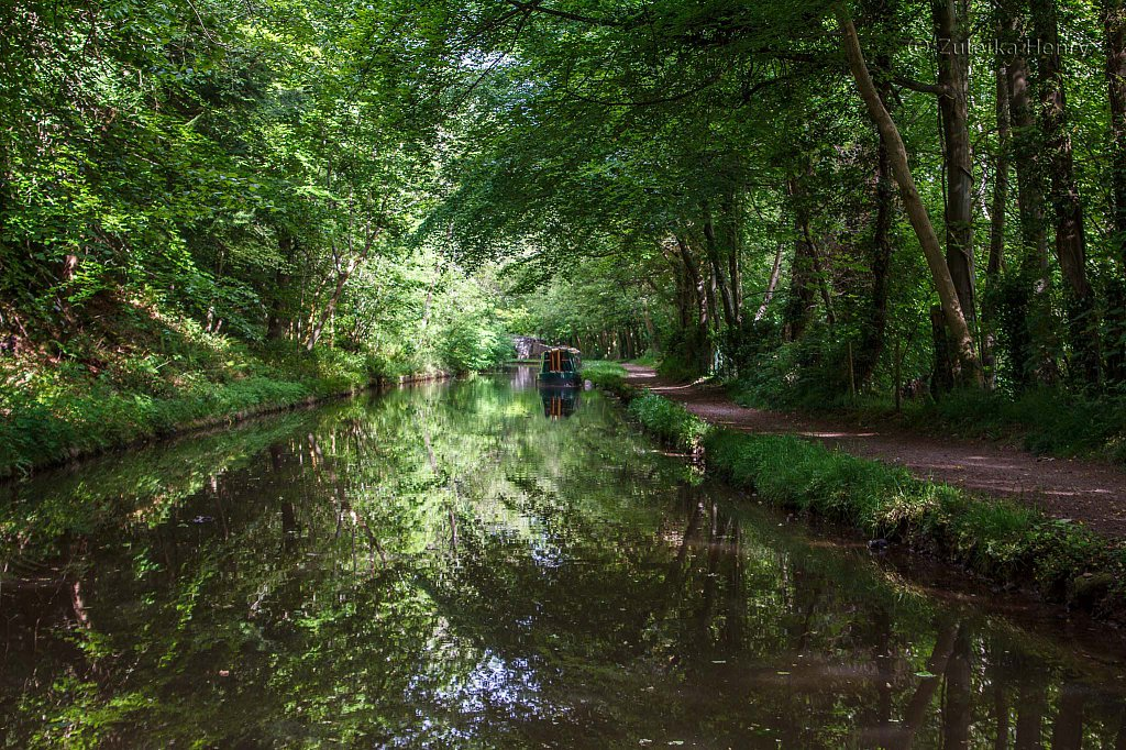55-Zuleika-Henry-Brecon-and-Abergavenny-Canal-50-shades-of-green.jpg
