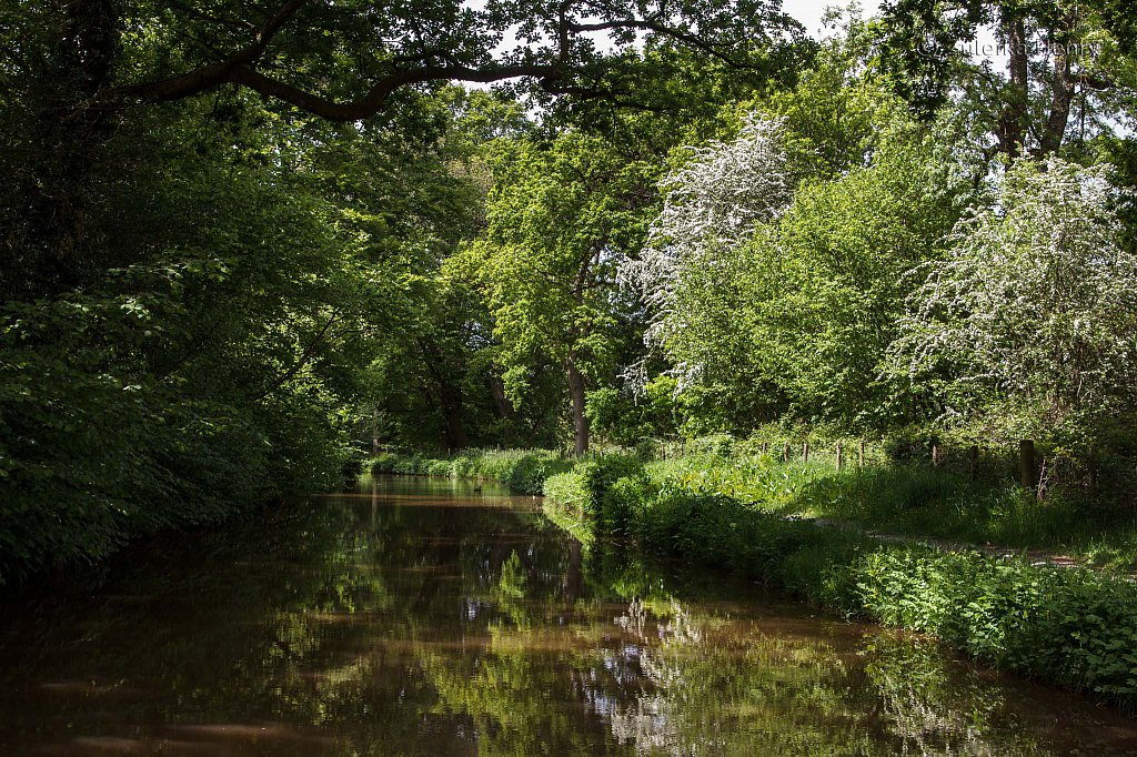 163-Zuleika-Henry-Brecon-and-Abergavenny-Canal-50-shades-of-green.jpg