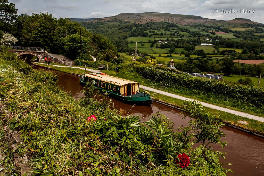 385-Zuleika-Henry-Brecon-and-Abergavenny-Canal-50-shades-of-green.jpg