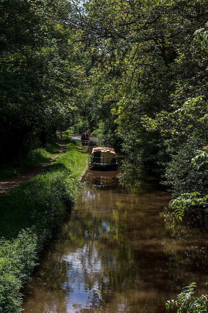 507-Zuleika-Henry-Brecon-and-Abergavenny-Canal-50-shades-of-green.jpg
