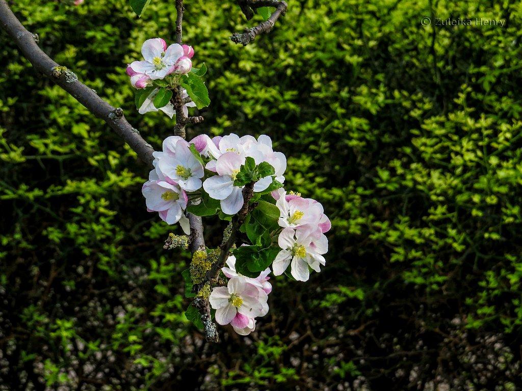 169-Zuleika-Henry-Paris-in-the-Spring-2016.jpg