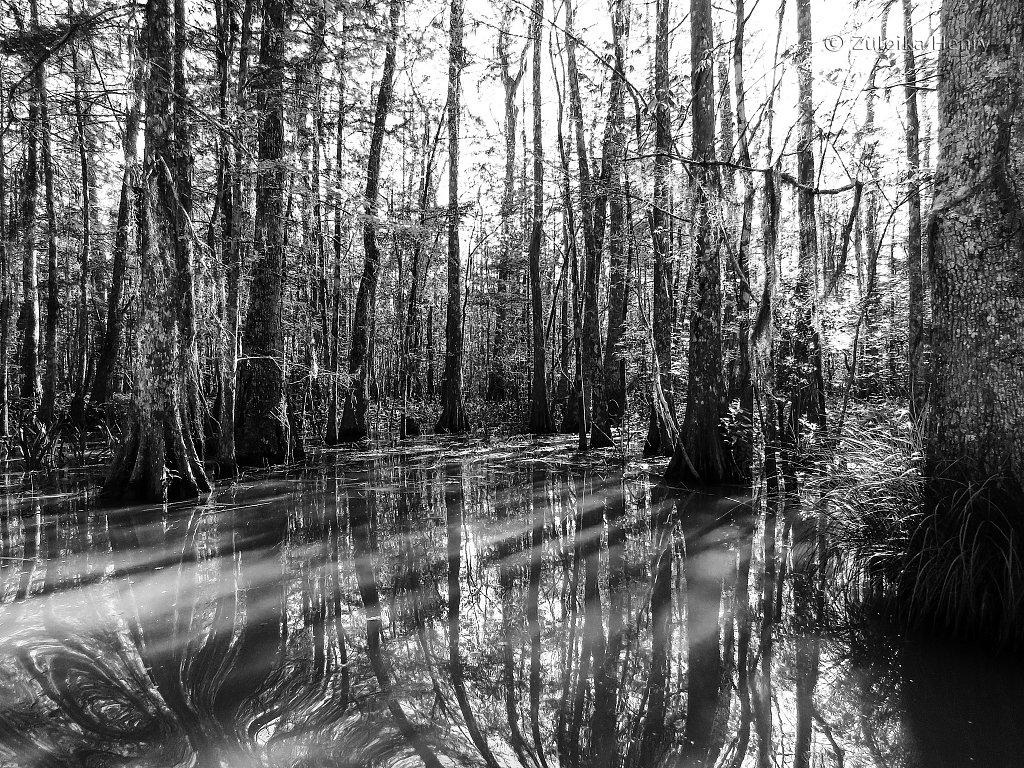 In the Bayou swamp