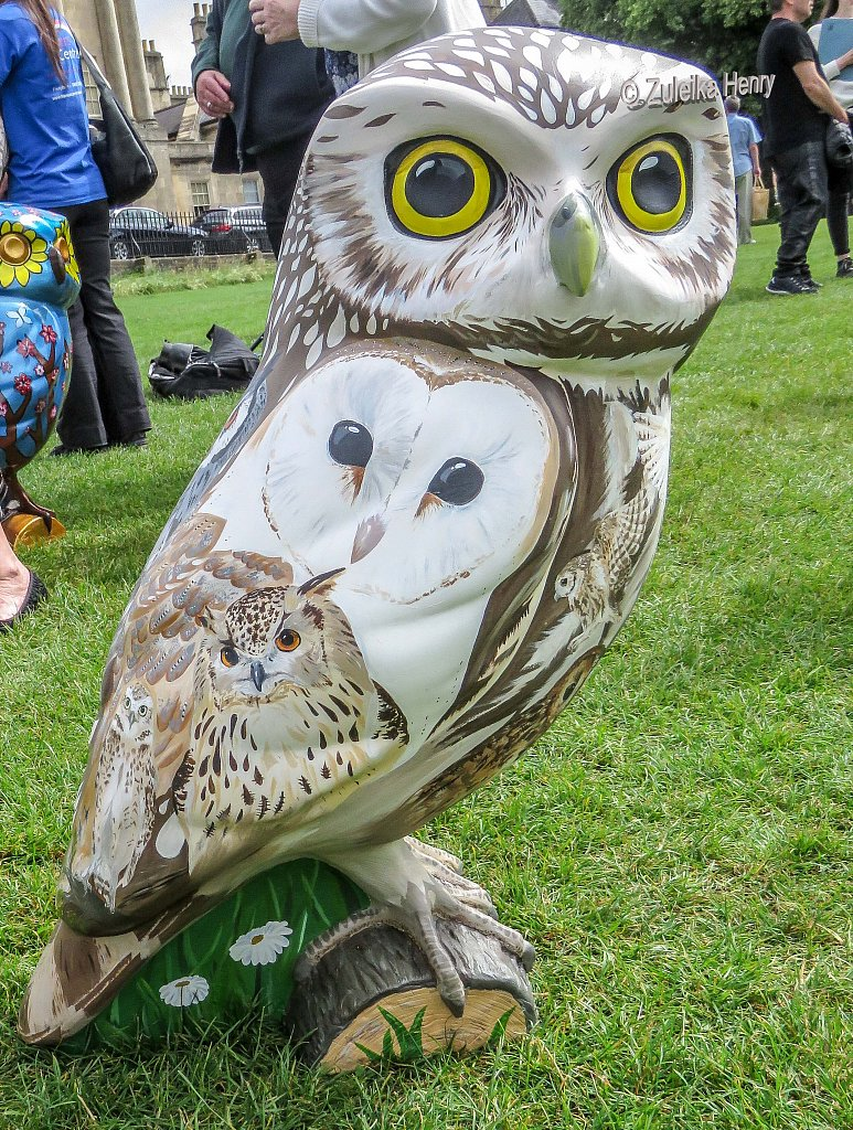 The-Owls-of-Bath-2018-16.jpg