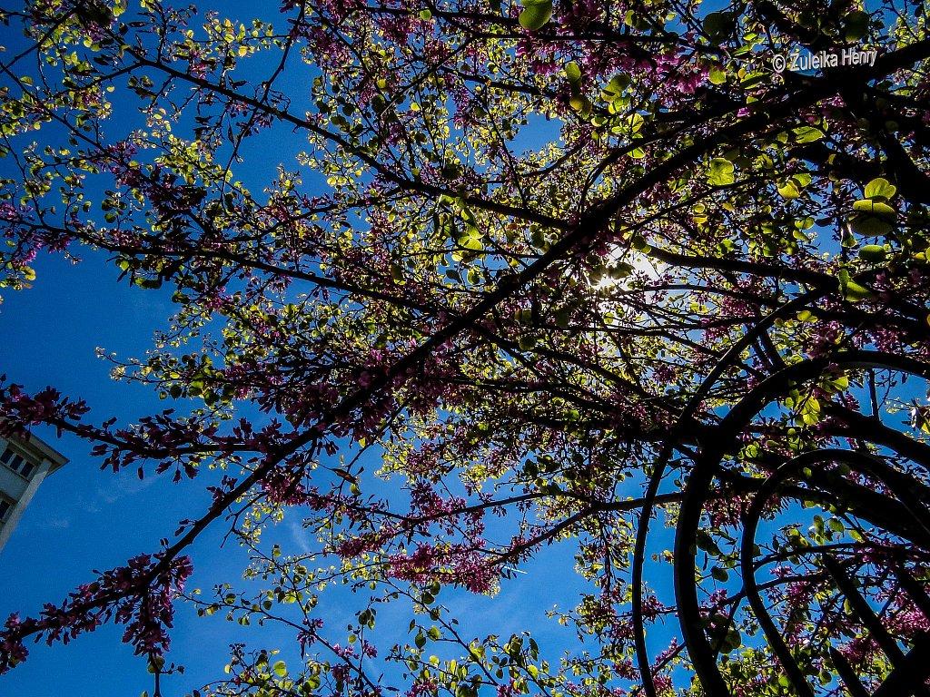 153-Zuleika-Henry-Paris-in-the-Spring-2016.jpg
